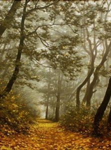 les priroda krajina reprodukcie obrazov drevené ramy